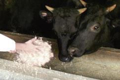家畜の世話