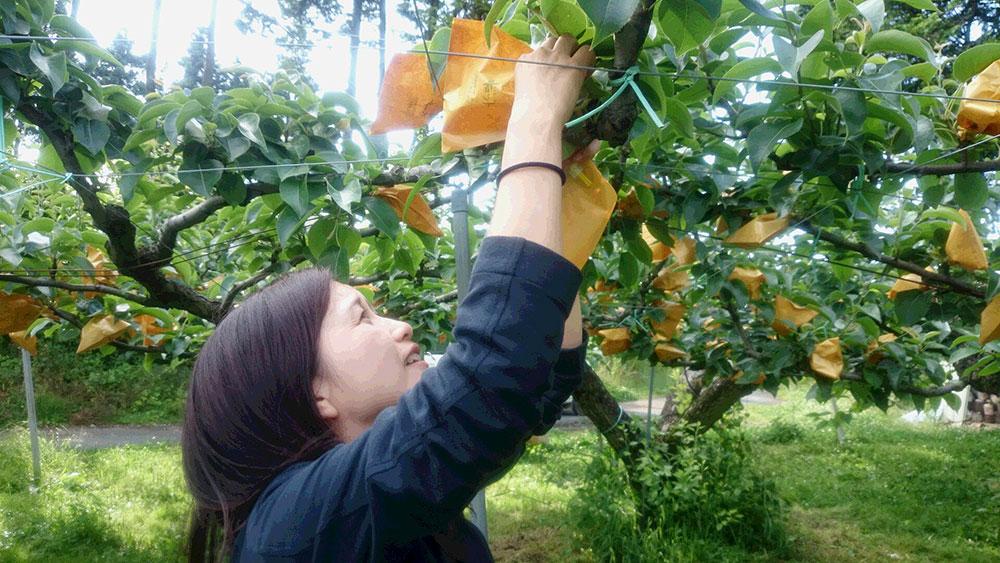 フルーツランドで果樹園体験